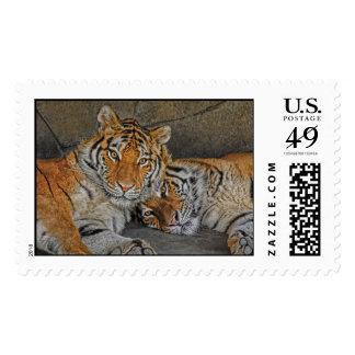 Tigres en cueva timbre postal