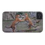 Tigres en el juego iPhone 4 Case-Mate carcasa