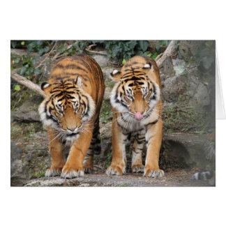 Tigres en el parque zoológico de Auckland Tarjeta De Felicitación