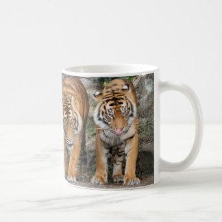 Tigres en el parque zoológico de Auckland Taza De Café