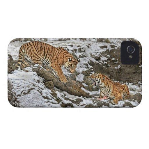 Tigres en guardia iPhone 4 cobertura