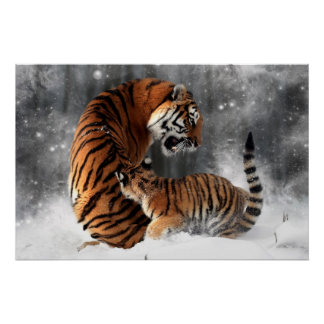 Tigres en nieve póster