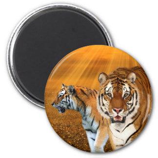 Tigres Imán Redondo 5 Cm