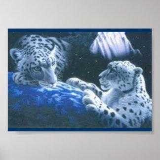 Tigres mágicos póster