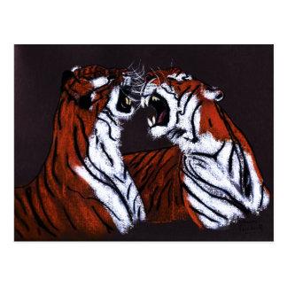 tigres que luchan postal