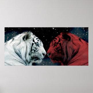 Tigres rojos y blancos que se hacen frente póster