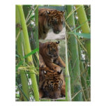 Tigres tres poster