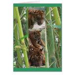 Tigres tres tarjetas