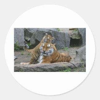 Tigresa y cachorro de tigre juguetón 1 etiquetas redondas