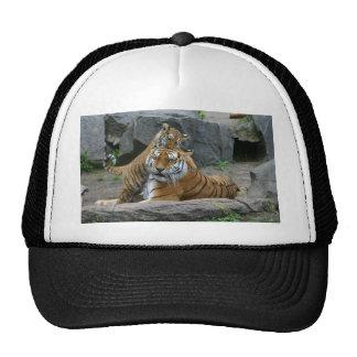 Tigress and playful tiger cub 1 trucker hat