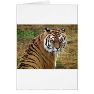 Tigress in the rain greeting cards