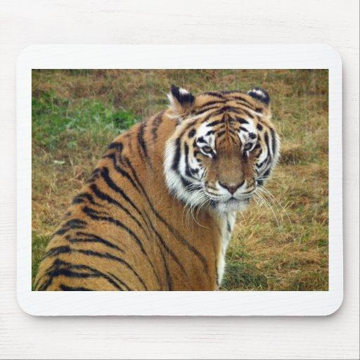 Tigress in the rain mousemats