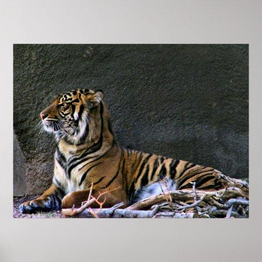 Tigress print