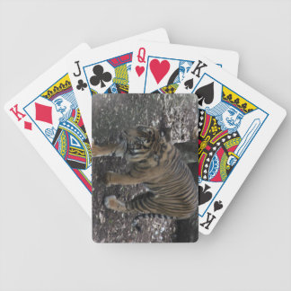 Tigs Card Decks