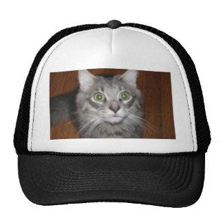 Tiki observado grande el gato gorra