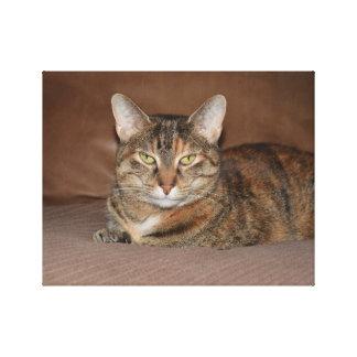 Tikka Cat beauty Canvas Print
