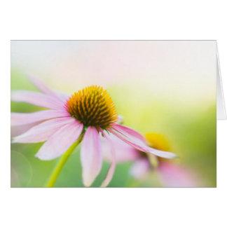 Til Sunbeams Find You Greeting Cards