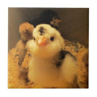 Tile--Baby Chick Black Spots Ceramic Tile