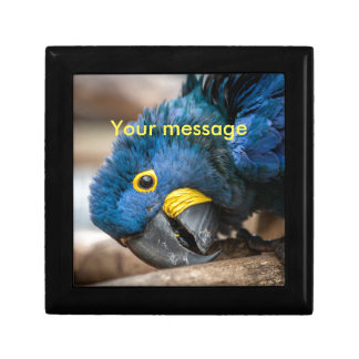 Tile box with featuring cute Hyacinth Macaw parrot