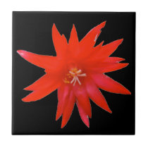 Tile - Easter Cactus