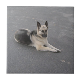 Tile: German Shepherd, or Your Pet's Picture Small Square Tile