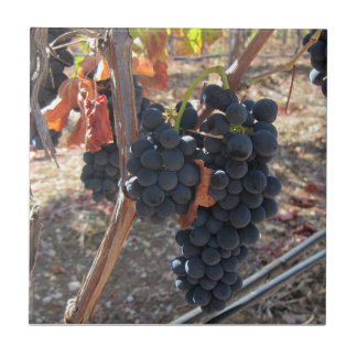 Tile: Grapes Ready to Harvest Small Square Tile