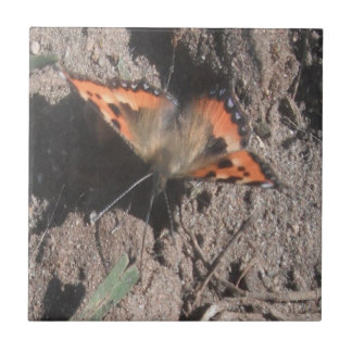 Tile Hairy Butterfly Dirt Foraging