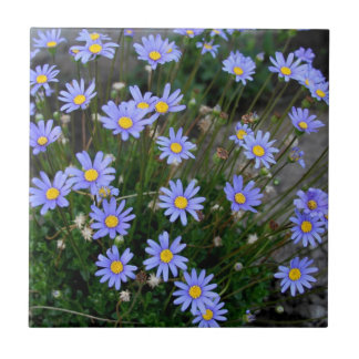 Tile with Blue Marguerite Flowers
