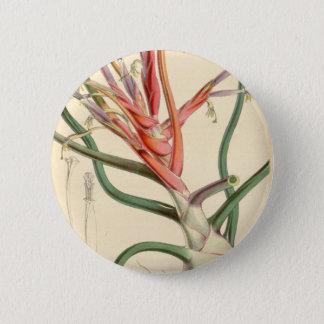 Tillandsia bulbosa pinback button
