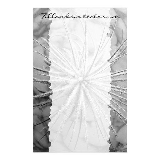 Tillandsia tectorum レター用品デザイン