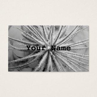 Tillandsia tectorum business card