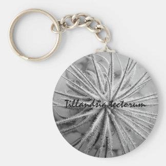 Tillandsia tectorum keychain