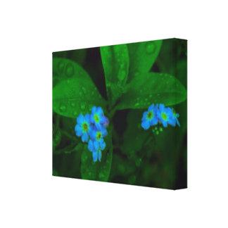 Tilly Lights Blue Flowers  : Navin Signa  Style Canvas Print