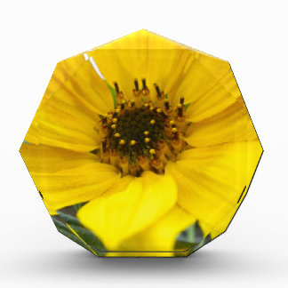 Tilted Sunflower Acrylic Award