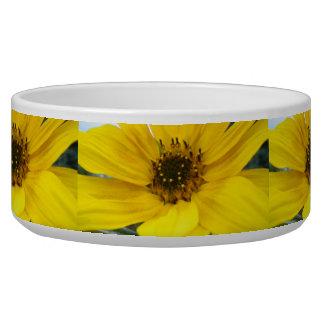 tilted sunflower bowl