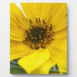 tilted sunflower plaque