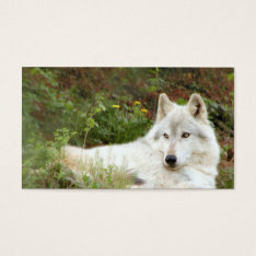 Timber or Gray wolf Business Card at Zazzle