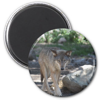 Timber Wolf 2 Inch Round Magnet