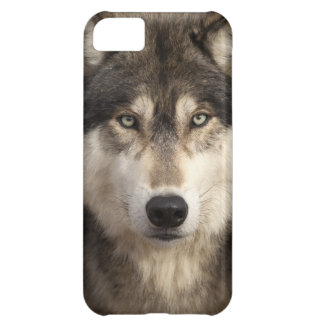 Timber wolf by Jim Zuckerman Case For iPhone 5C