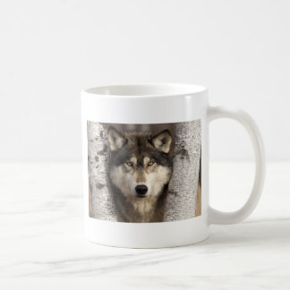 Timber wolf by Jim Zuckerman Coffee Mug