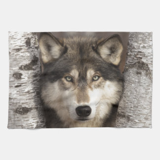 Timber wolf by Jim Zuckerman Hand Towels