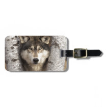 Timber wolf by Jim Zuckerman Luggage Tag