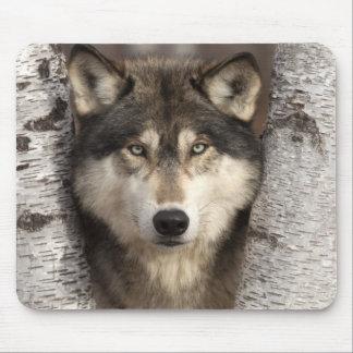 Timber wolf by Jim Zuckerman Mouse Pad