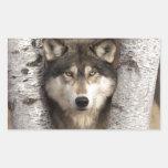 Timber wolf by Jim Zuckerman Rectangular Sticker
