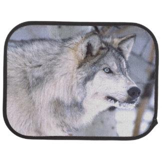 Timber Wolf, Canis lupus, Movie Animal Utah) Car Mat