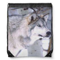 Timber Wolf, Canis lupus, Movie Animal Utah) Drawstring Backpack