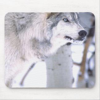 Timber Wolf, Canis lupus, Movie Animal Utah) Mouse Pad