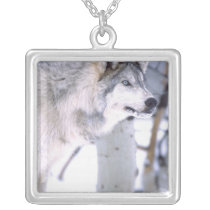 Timber Wolf, Canis lupus, Movie Animal Utah) Silver Plated Necklace