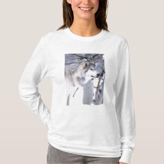 Timber Wolf, Canis lupus, Movie Animal Utah) T-Shirt