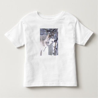 Timber Wolf, Canis lupus, Movie Animal Utah) T Shirt